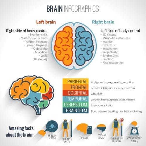 Neurological facts about the brain - chiropractic neurology
