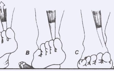 Foot Biomechanics: How You Walk Affects Everything